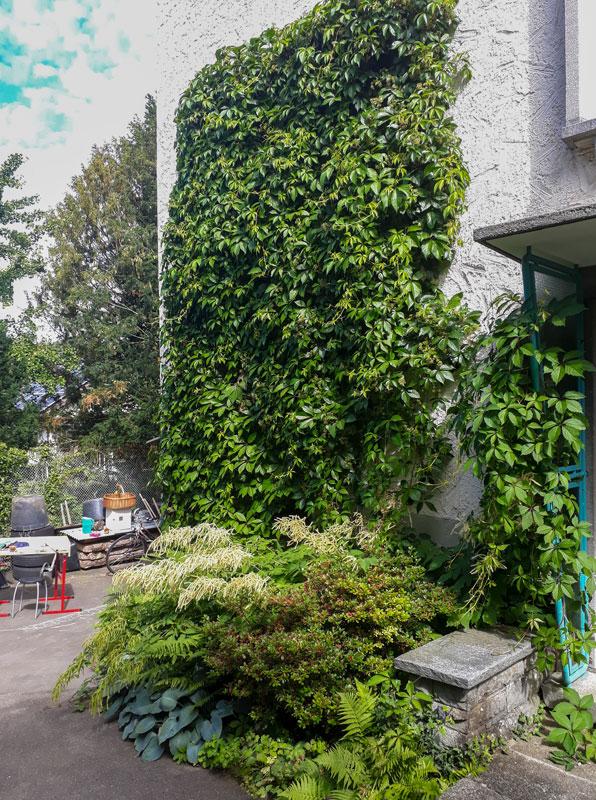Befplanzungen Vassiliou Gartenbau & Unterhalt